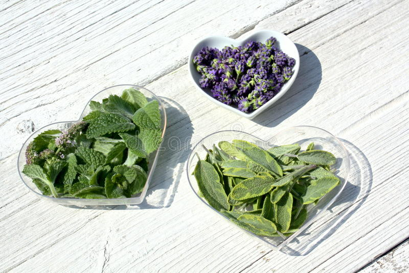 Herbs in heart shaped dishes stock photos