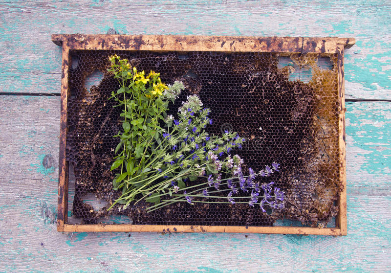 Herbs and honeycomb on rustic wooden background royalty free stock images