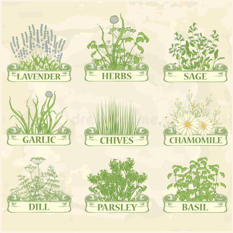 Herbs royalty free illustration