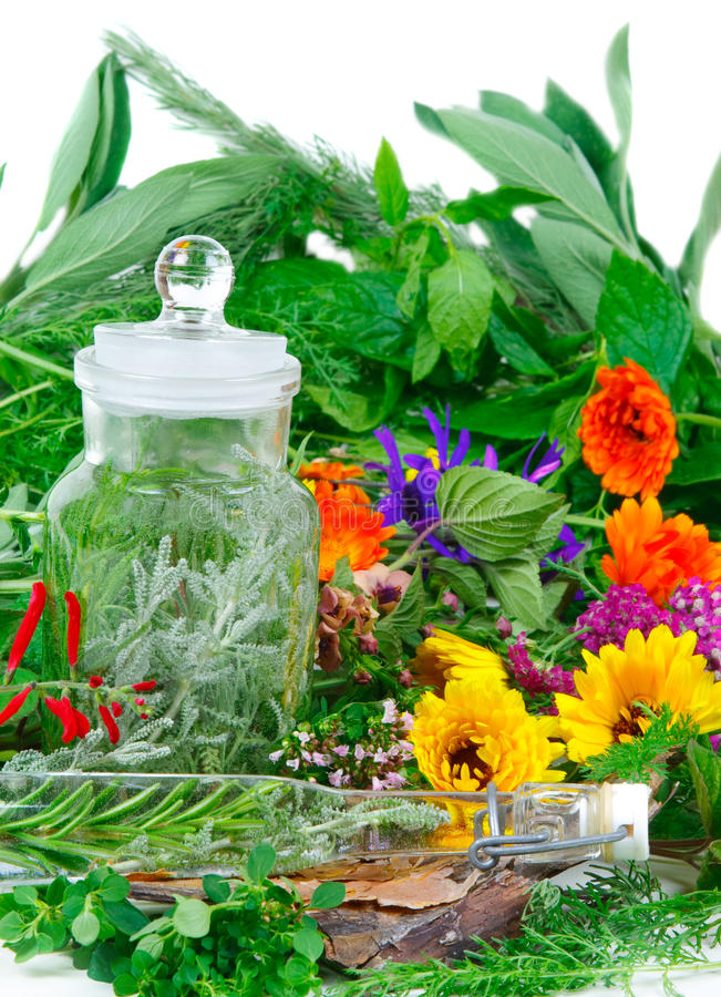 Herbs for medicine or cooking royalty free stock photo