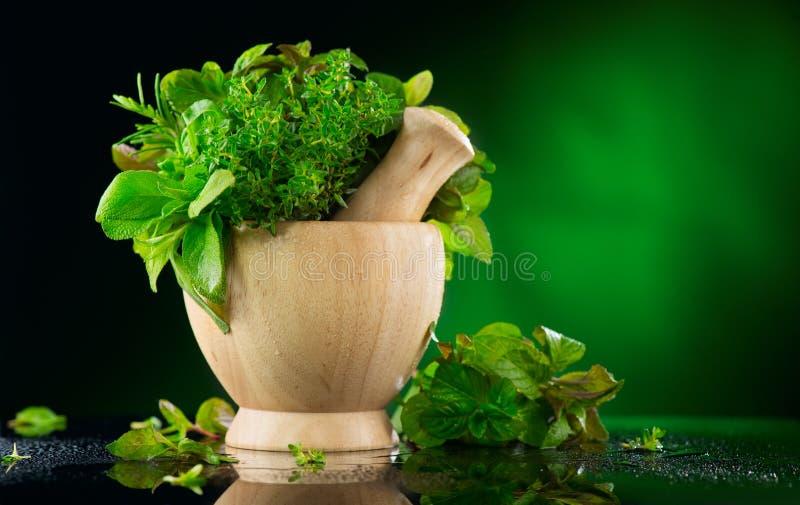 herbs O grupo da erva aromática orgânica verde fresca sae no almofariz de madeira com o pilão sobre o fundo escuro foto de stock