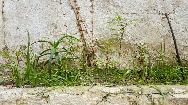 Herbs in old place. Herbs old place parastic plant stock image