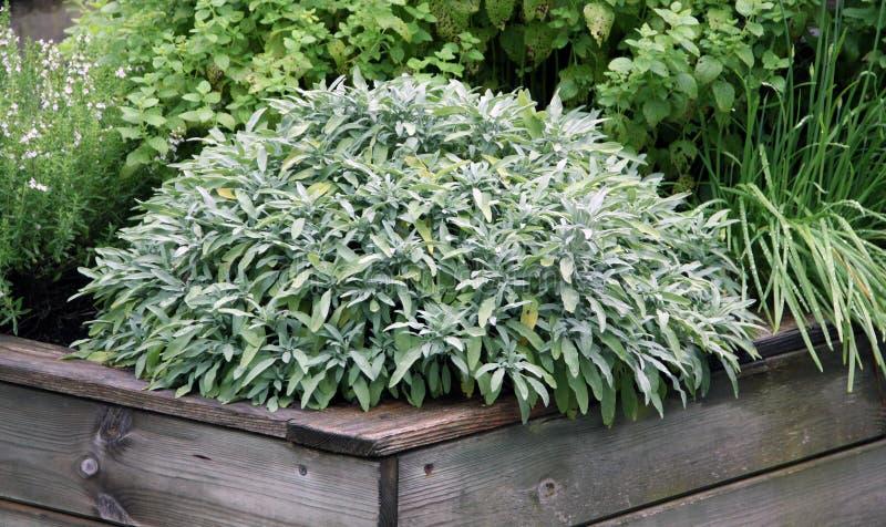 Herbs plant on the raised garden bed stock photos