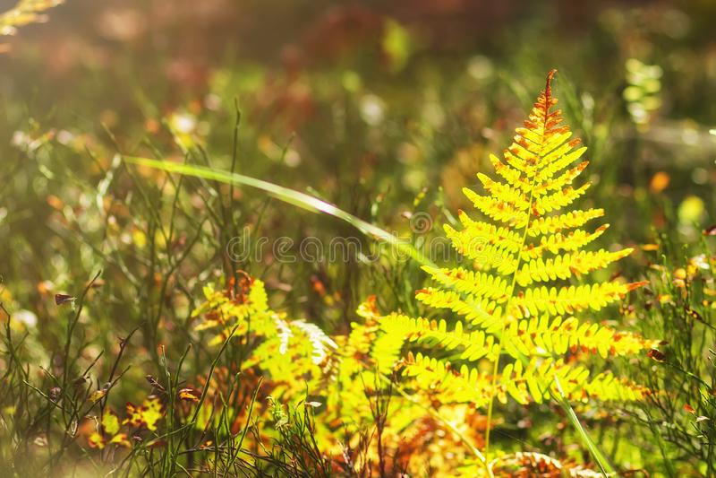 herbs Plantas da floresta Fundo da natureza do outono herbal foto de stock royalty free