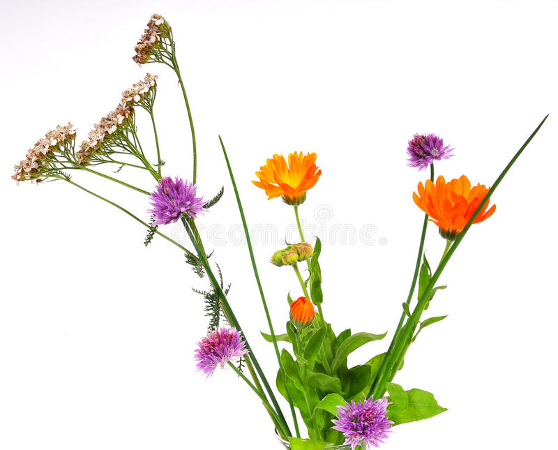Herbs plants flowers royalty free stock photos