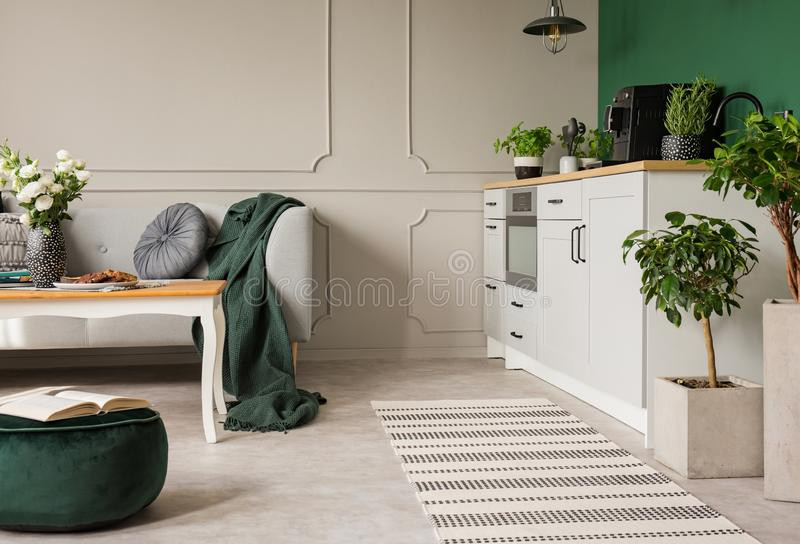Herbs and plants in open plan kitchen and living room interior with grey cabinets and comfortable sofa stock images