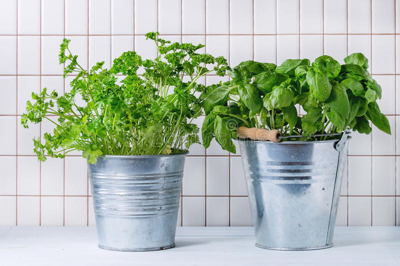 Herbs in pot stock photography
