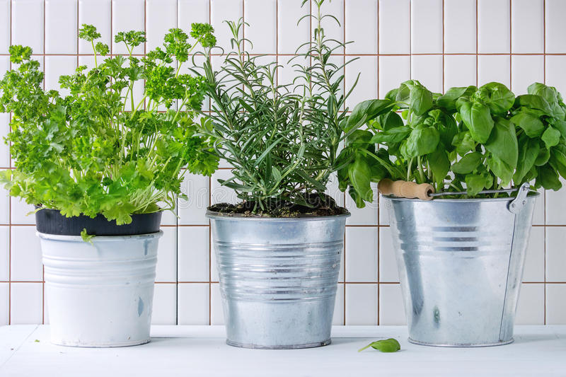 Herbs in pot royalty free stock image