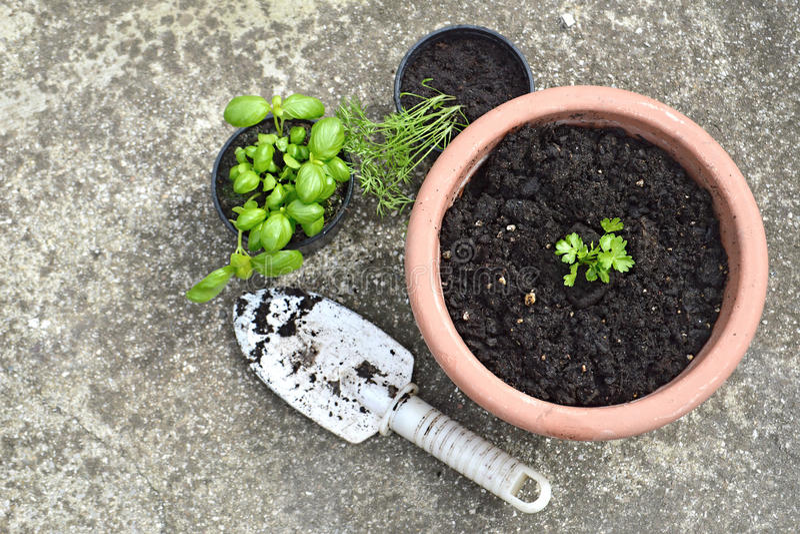 Herbs in pots stock image