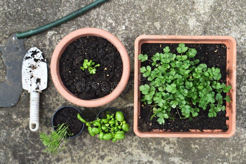 Herbs in pots stock photos