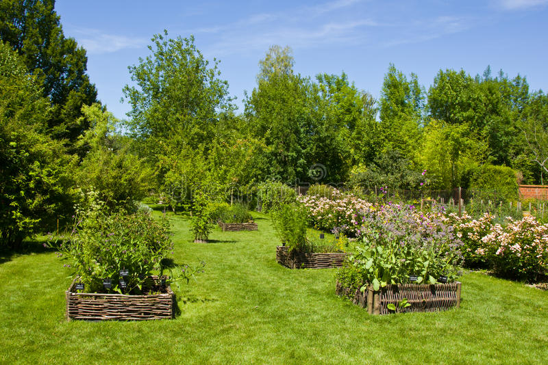 Herbs in Provins rose garden royalty free stock photography