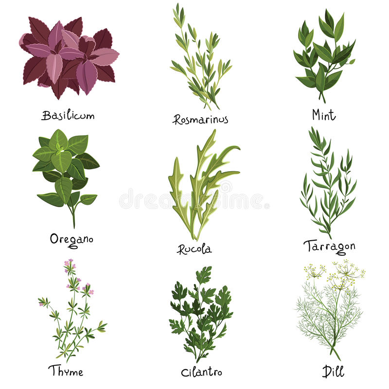 Herbs set. Set of nine vector herbs. Herbs set. Vector illustration vector illustration