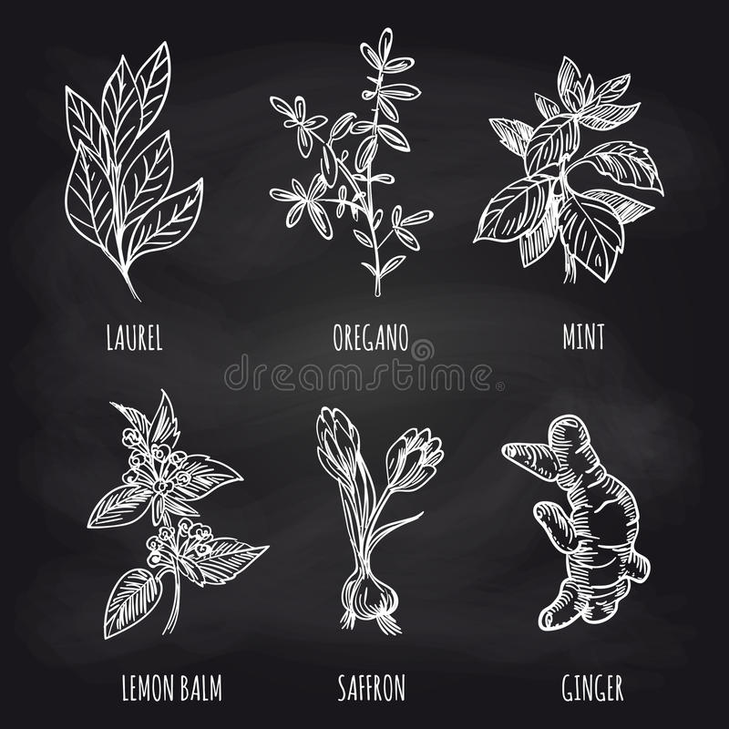 Download Herbs And Spice On Blackboard Stock Vector - Image: 90293332