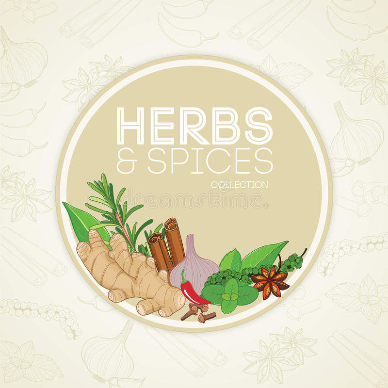 Herbs and spices in border frame vector illustration