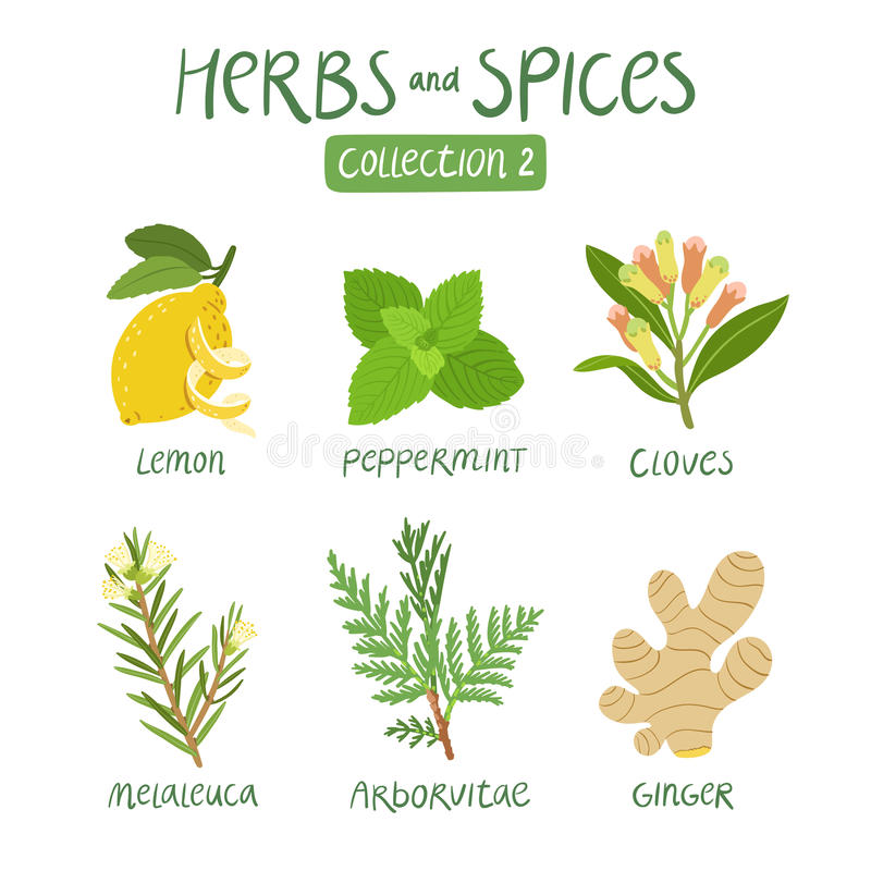 Herbs and spices collection 2 royalty free illustration