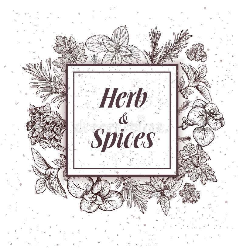 Download Herbs And Spices Label. Engraving Illustrations For Tags. Stock Vector - Image: 83713564
