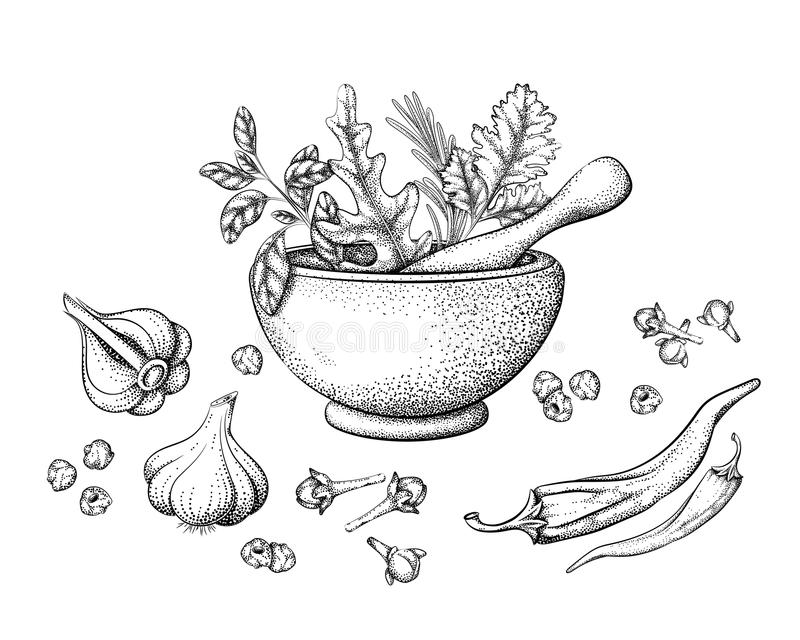 Herbs and spices in a mortar stock illustration