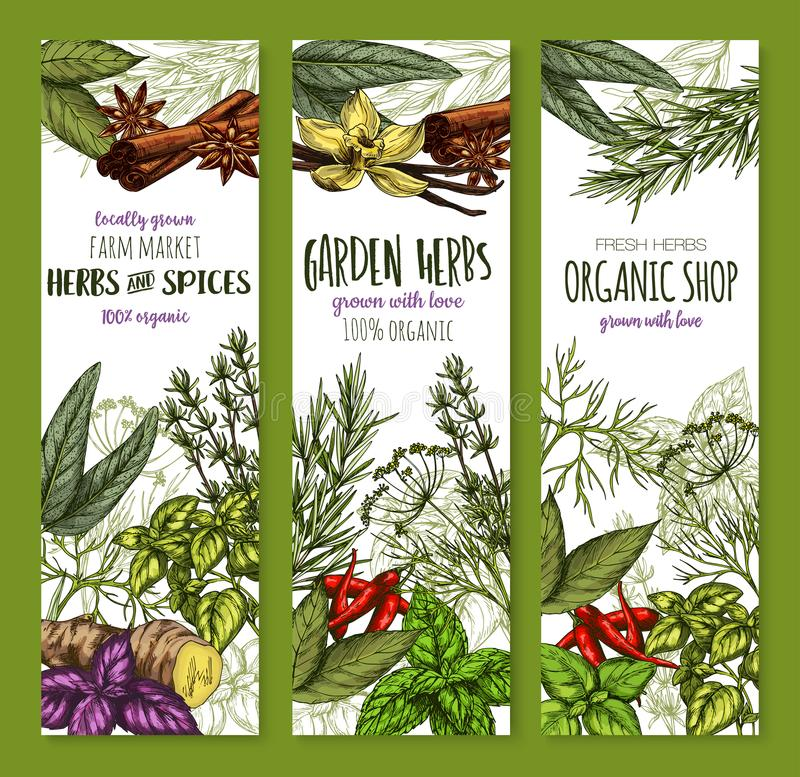 Vector banners sketch spices and herbs seasonings stock illustration