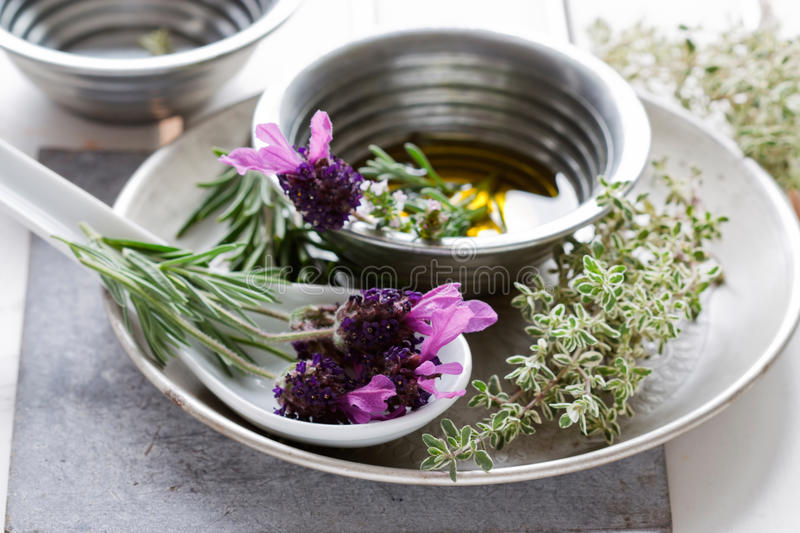 Download Herbs Still Life Royalty Free Stock Image - Image: 19754506