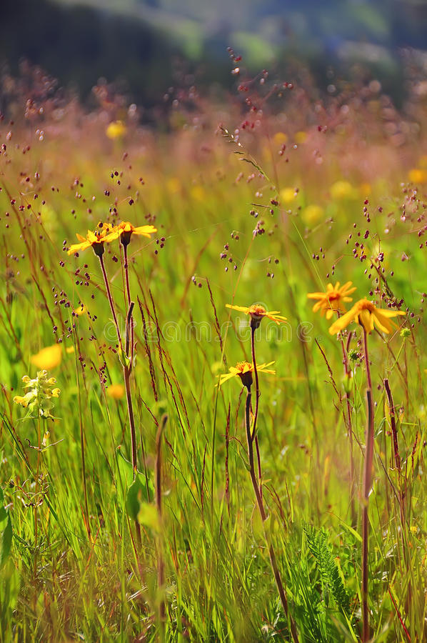 Herbs summer wild yellow flowers stock photo image of meadow download herbs summer wild yellow flowers stock photo image of meadow park mightylinksfo