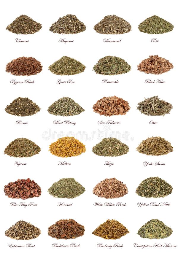 Herbs for Herbal Medicine stock photo