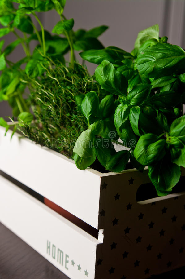 Herbs in white wooden box stock photos