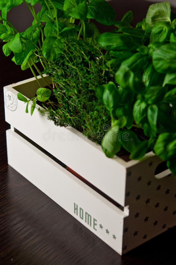 Herbs in white wooden box stock image