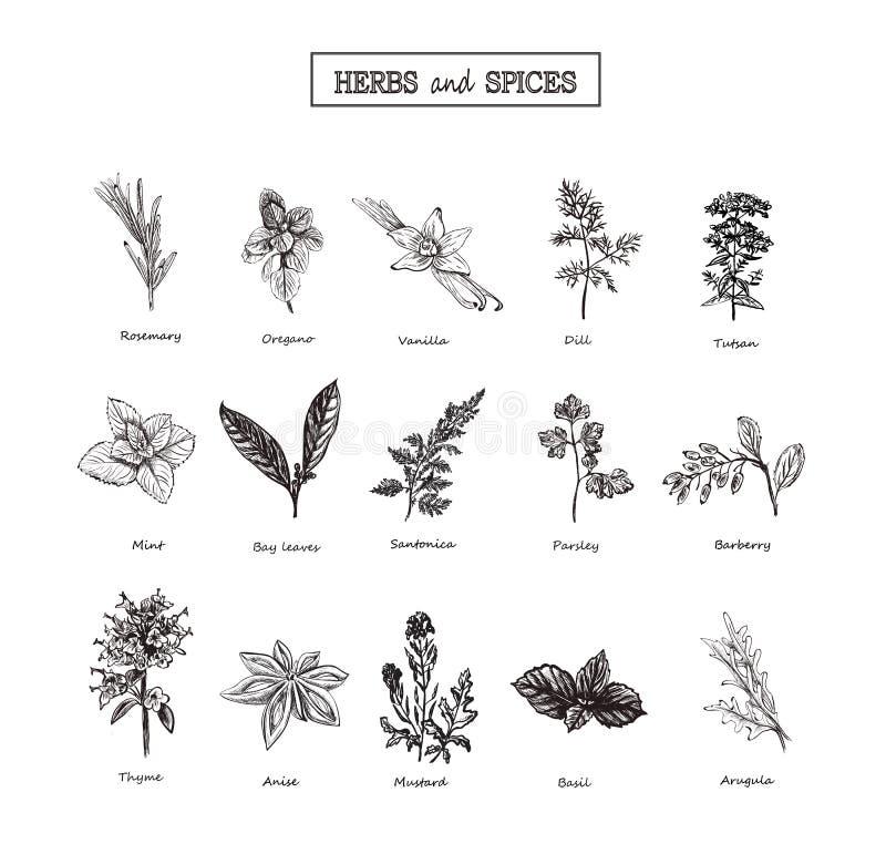 Herbs and Wild Flowers. Botany. 15 Set. Vintage flowers. Vector illustration vector illustration