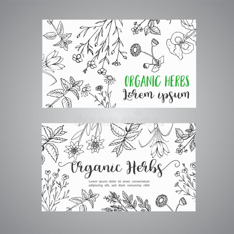 Herbs and Wild Flowers. Hand drawn herbal design with spices, medicinal, cosmetic plants. Illustration for advertising vector illustration