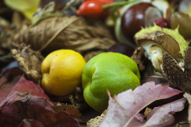 Herbstäpfel in den Blättern lizenzfreies stockfoto