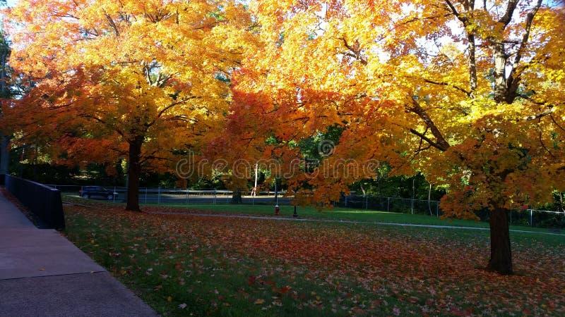 Herbst stockbild