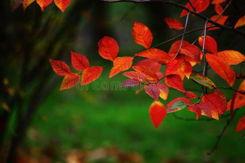 Herbst #20 stockfotos