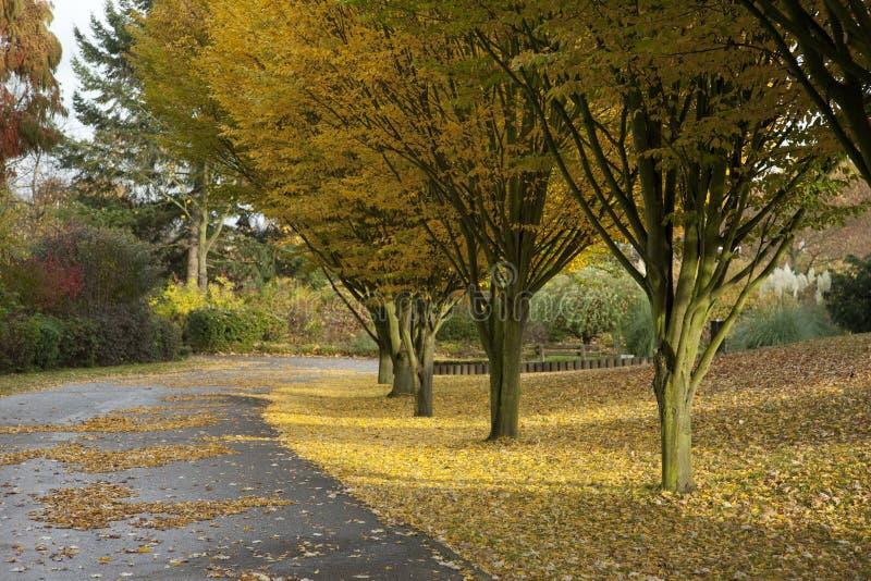 Herbst 2011 fotografie stock