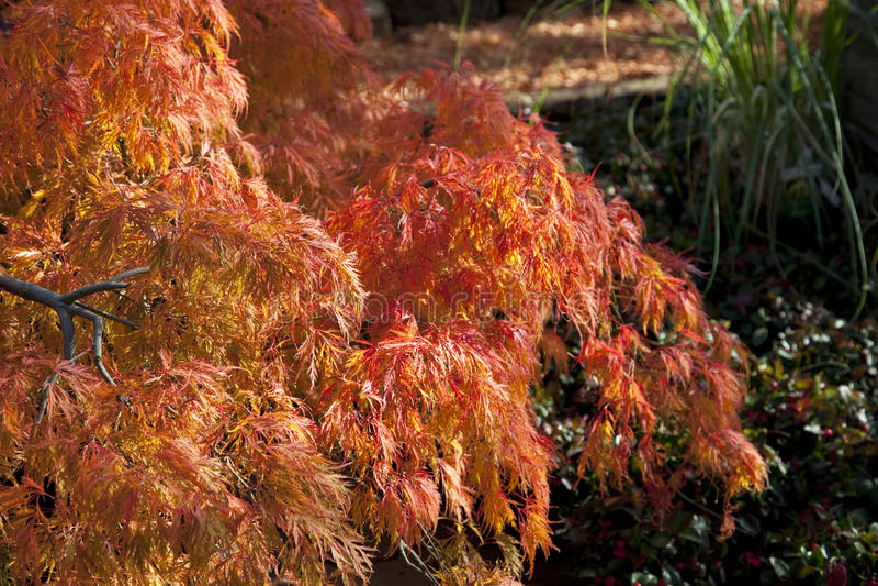 Herbst 2011 fotografie stock libere da diritti