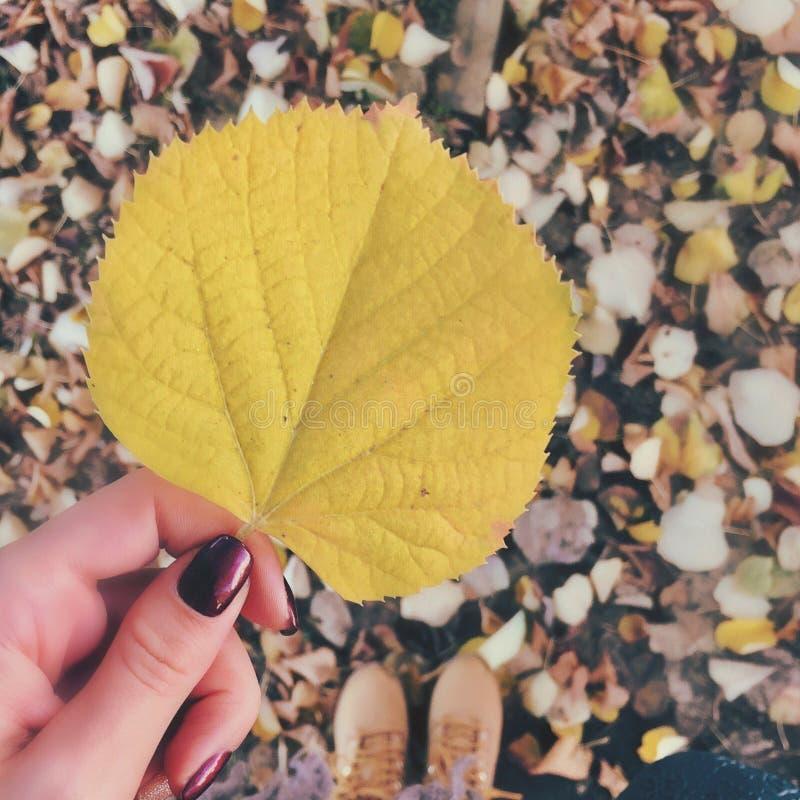 Herbst lizenzfreies stockbild