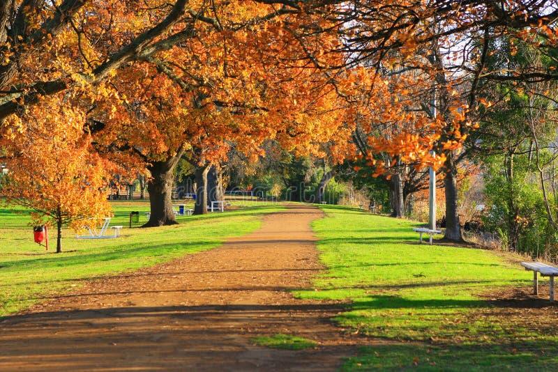 Herbst-Allee stockfotos