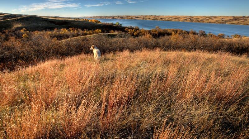 Herbst-Ansicht Saskatchewan lizenzfreie stockfotos