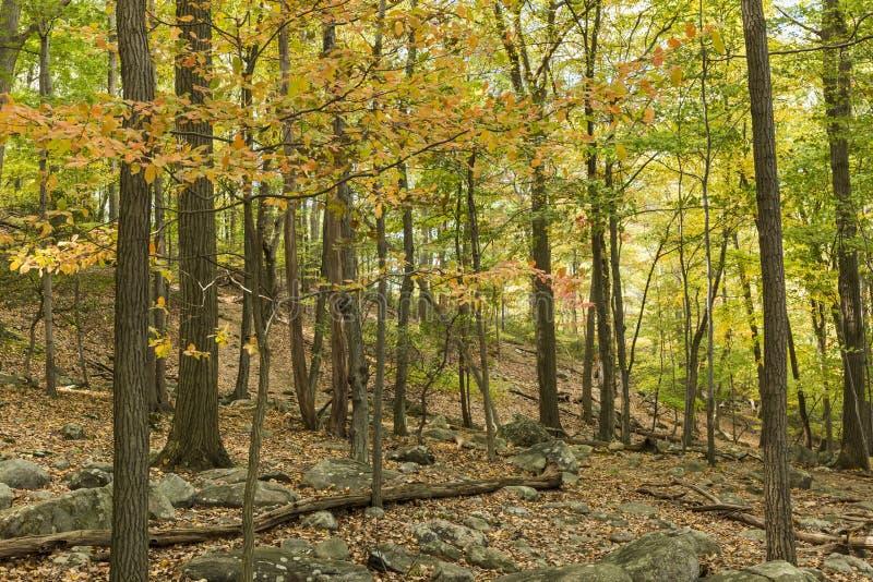 Herbst auf Bear Mountain-Spur lizenzfreies stockfoto