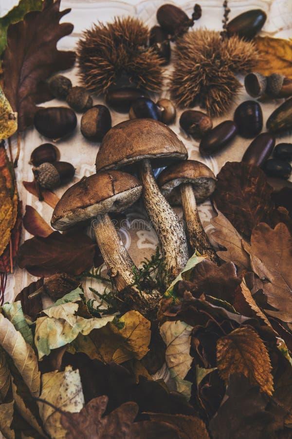 Herbst auf dem Tisch mit Pilzen und Kastanien stockfoto