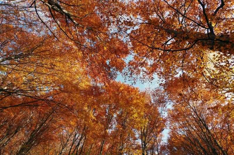 Herbst auf Höhe lizenzfreie stockfotografie