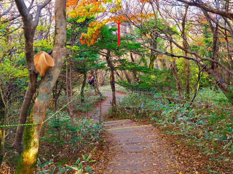 Herbst auf Jeju-Insel lizenzfreies stockfoto