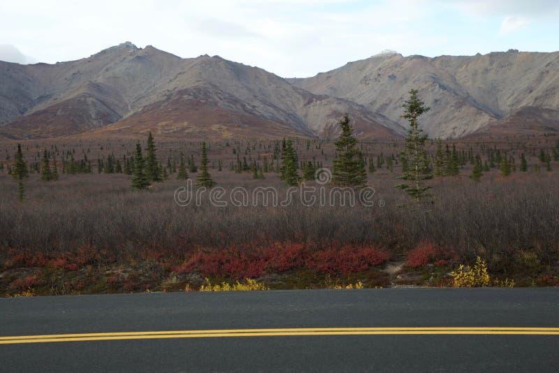 Herbst auf Parks Hwy nahe Nationalpark Denali, Alaska lizenzfreie stockfotografie