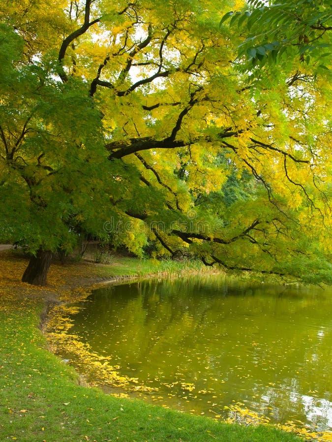 Herbst auf Seeufer, schöne Landschaft lizenzfreies stockfoto