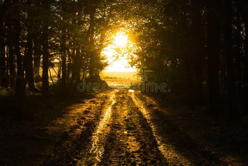 Herbst auf Woodbury-Common, Devon lizenzfreie stockfotos