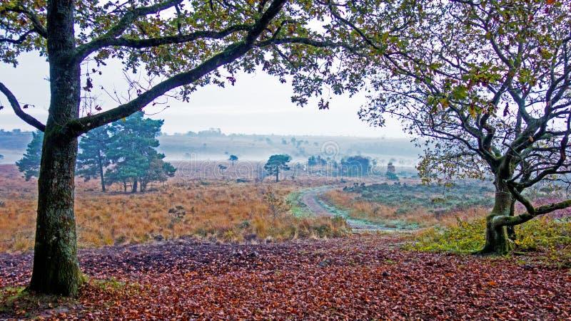 Herbst auf Woodbury-Common, Devon lizenzfreies stockfoto