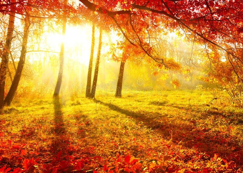 Herbst-Bäume lizenzfreies stockfoto
