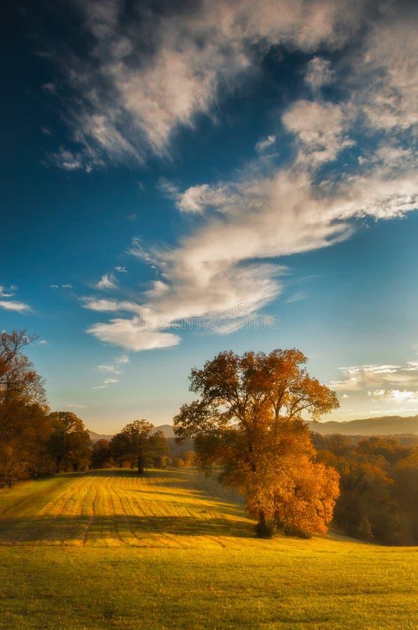 Herbst-Bäume lizenzfreie stockbilder