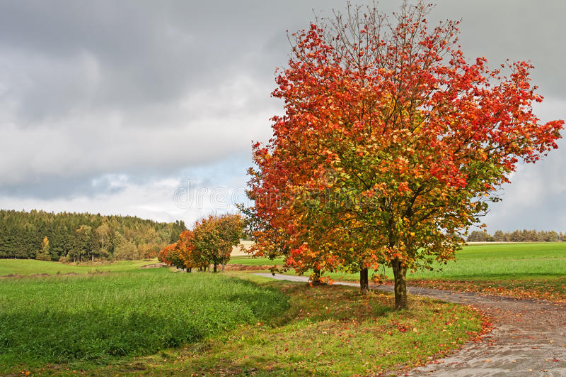 Herbst-Bäume an der Straße lizenzfreie stockfotografie