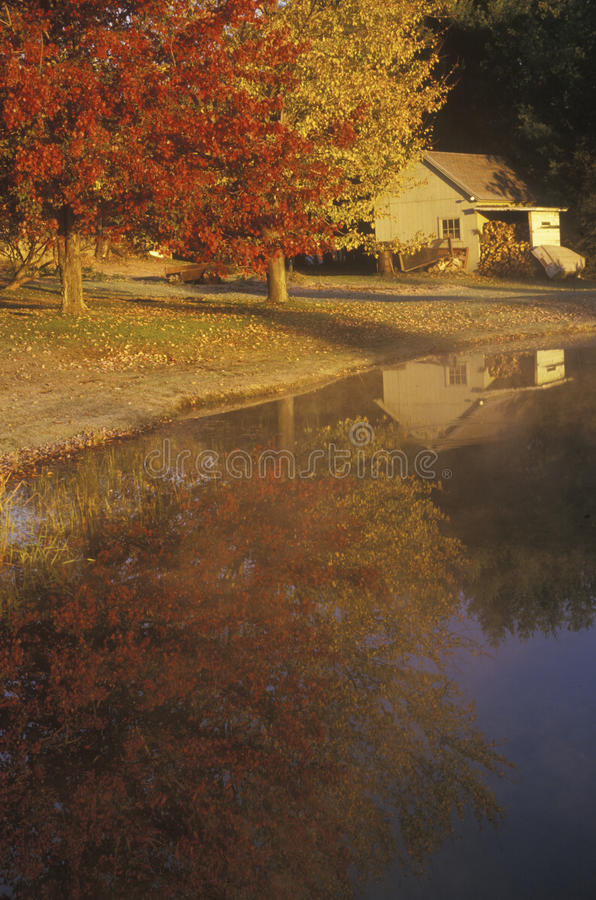 Herbst-Bäume reflektiert im Wasser stockfotografie