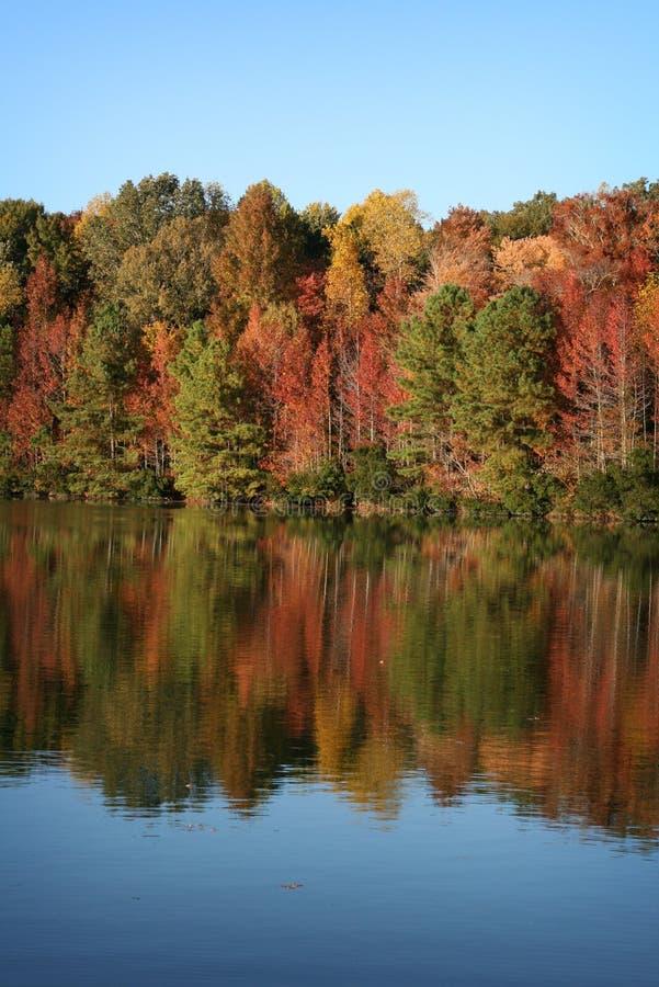 Herbst-Bäume reflektierten sich im blauen See im Fall stockfoto